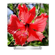 F20 Red Hibiscus Shower Curtain