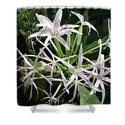 F3 Queen Emma Lily Shower Curtain