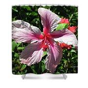 F5 Hibiscus Flower Hawaii Shower Curtain