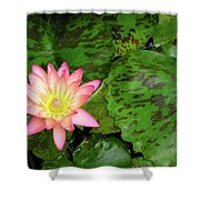 F6 Water Lily Shower Curtain