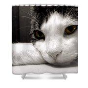 Fabulous Feline Shower Curtain