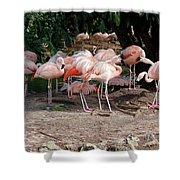 Fabulous Flamingos Shower Curtain