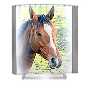 Face The Horse That Is Facing You   Shower Curtain
