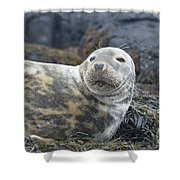 Face Of A Gray Seal Shower Curtain