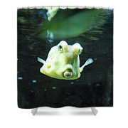 Face Of A Horned Boxfish Swimming Underwater Shower Curtain