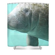 Face Of A Manatee Swimming Underwater Shower Curtain