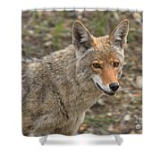 Face Of The American Coyote Shower Curtain