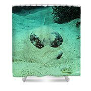 Face Off With Stingray Shower Curtain