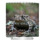 Face To Face With A Fowler Toad  Shower Curtain