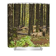 Faces In The Woods Shower Curtain