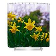 Daffodils Sky Shower Curtain