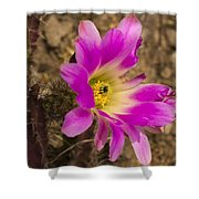 Faded Cactus Beauty Shower Curtain