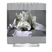 Faded Iris 6622 H_5 Shower Curtain