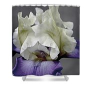 Faded Iris 6622 H_9 Shower Curtain