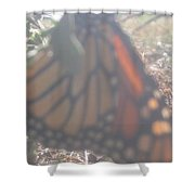 Faded Monarch  Shower Curtain