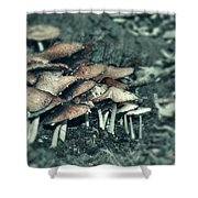 Faded Mushrooms Parade  Shower Curtain