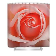 Faded - Perfect Pink Rose Shower Curtain