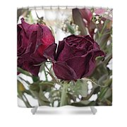 Faded Rose 2 Shower Curtain
