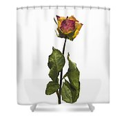 Faded Rose Flower Shower Curtain