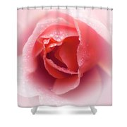 Faded Rose Shower Curtain