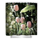 Faded Tulips Shower Curtain