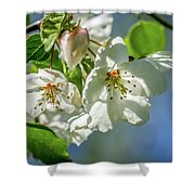 Fading Beauties Shower Curtain