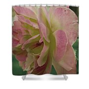 Fading Rose In Sepia Shower Curtain