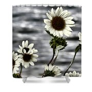 Fading Sunflowers Shower Curtain