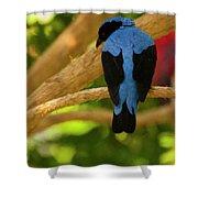 Fairy Bluebird Male Digital Oil  Shower Curtain