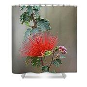 Fairy Duster-img_488917 Shower Curtain