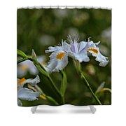 Fairy Iris 2 Shower Curtain