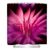 Fairy Light Shower Curtain