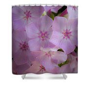 Fairy Tale Phlox Shower Curtain