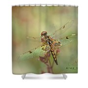 Fairy Wings Shower Curtain
