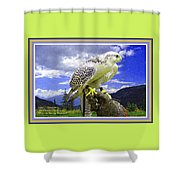 Falcon Being Trained H A With Decorative Ornate Printed Frame. Shower Curtain