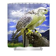 Falcon Being Trained H B Shower Curtain