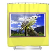 Falcon Being Trained H B With Decorative Ornate Printed Frame. Shower Curtain