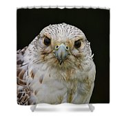 Falcon Close Up Shower Curtain