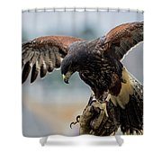 Falcon On Gloved Hand 5251 Shower Curtain
