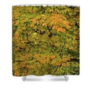 Fall #2 Shower Curtain