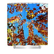 Fall Apricot Leaves Shower Curtain