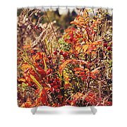 Fall Around  Shower Curtain