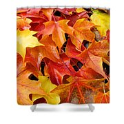 Fall Art Prints Red Orange Yellow Autumn Leaves Baslee Troutman Shower Curtain