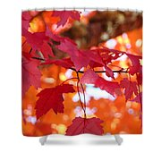 Fall Art Red Autumn Leaves Orange Fall Trees Baslee Troutman Shower Curtain