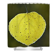 Fall Aspen Leaf Shower Curtain