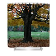 Fall At Maymont Shower Curtain