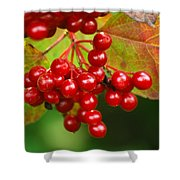 Fall Berries 2 Shower Curtain