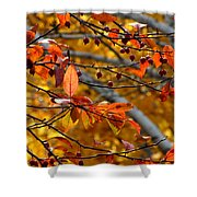 Fall Berries II Shower Curtain