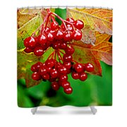 Fall Berries Shower Curtain