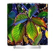 Fall Blackberry Shower Curtain
